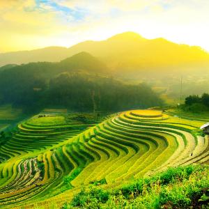 Tranh Dán Tường Phong Cảnh Ruộng Bậc Thang